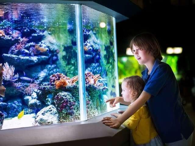 Aquarium visite enfant